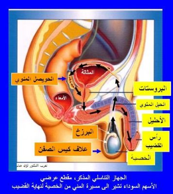 [صورة مرفقة: normal_apareil_gen_hom.jpg]
