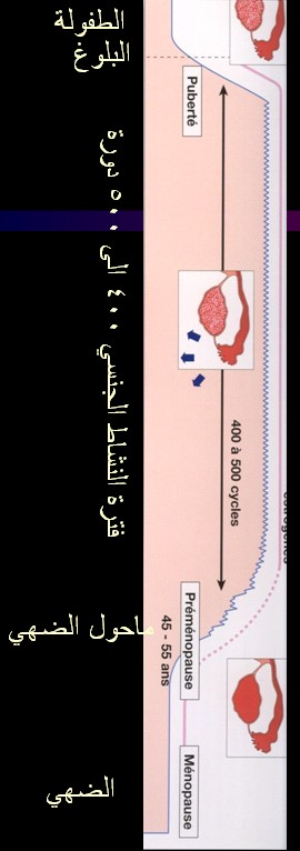 الدورة الطمثية ـ الدورة الشهرية عند المرآة للأخت كئيبه و للجميع cycl ETAP LA VIE.jpg